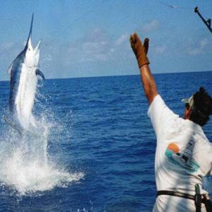 Pêche sportive / Pêche au gros